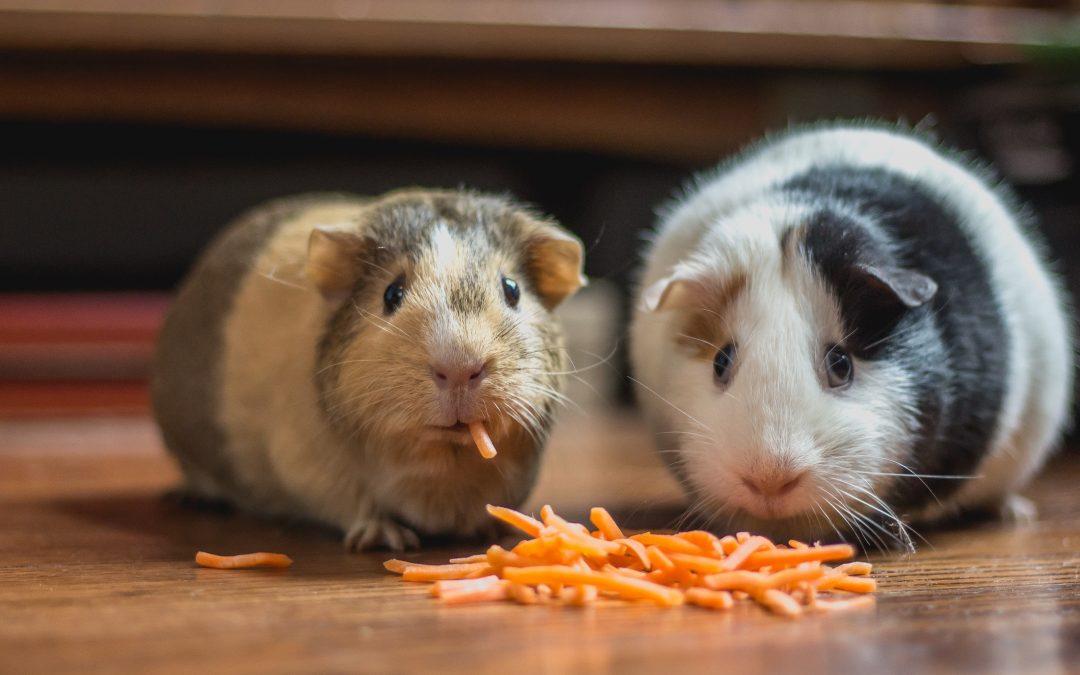 Wunder der Natur: Karotte